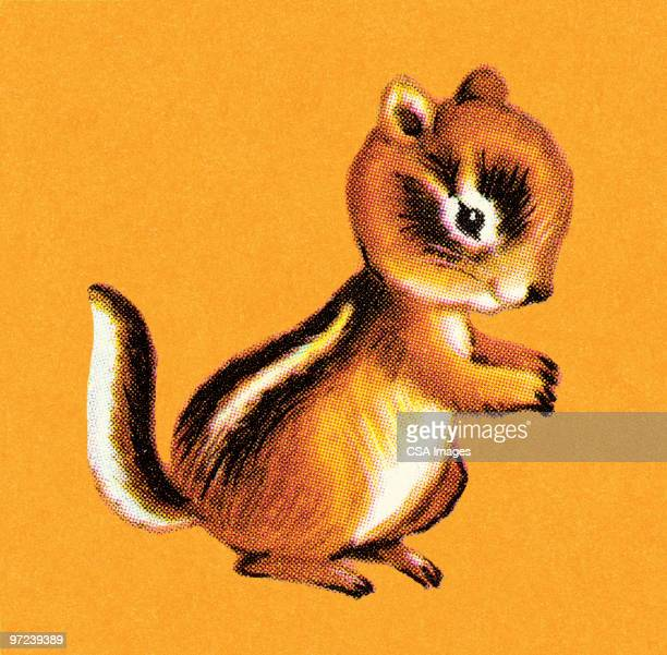 chipmunk - chipmunk stock illustrations