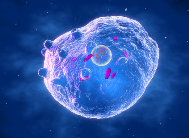 Chlamydia trachomatis bacterium, illustration