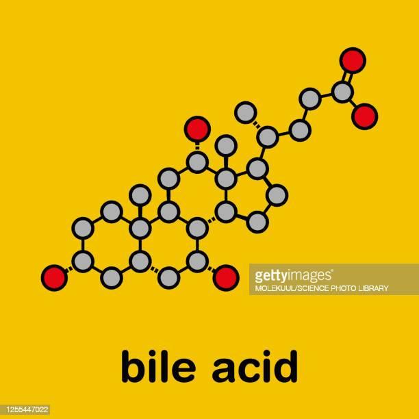 cholic acid bile molecule, illustration - bladder stock illustrations