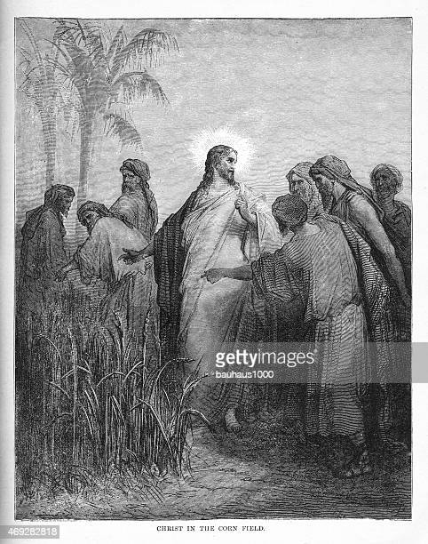 christ in the corn field engraving - zea stock illustrations, clip art, cartoons, & icons