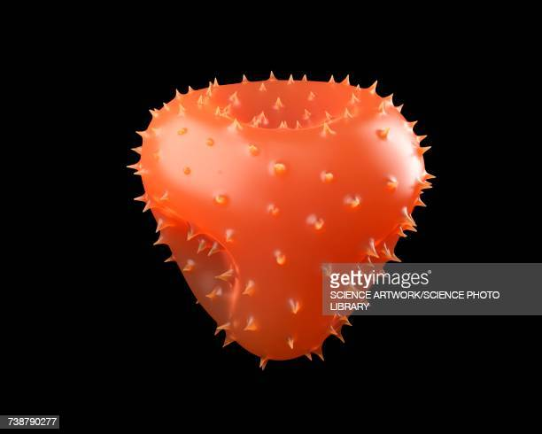 christmas cactus pollen - シャコバサボテン点のイラスト素材/クリップアート素材/マンガ素材/アイコン素材
