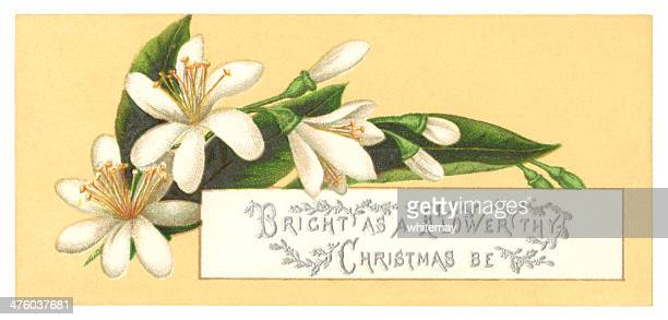 christmas roses greetings card, 1876 - ranunculus stock illustrations, clip art, cartoons, & icons