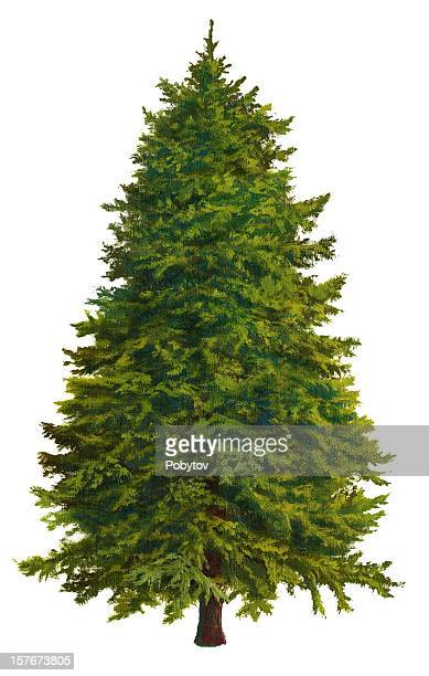 A Christmas tree on a white background