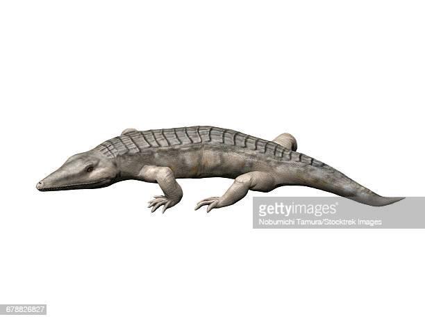 ilustraciones, imágenes clip art, dibujos animados e iconos de stock de chroniosuchus is an extinct animal from the paleozoic era. - paleozoología