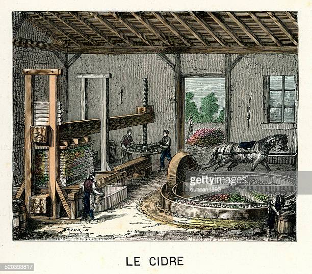 cider making in france - brewery stock illustrations, clip art, cartoons, & icons