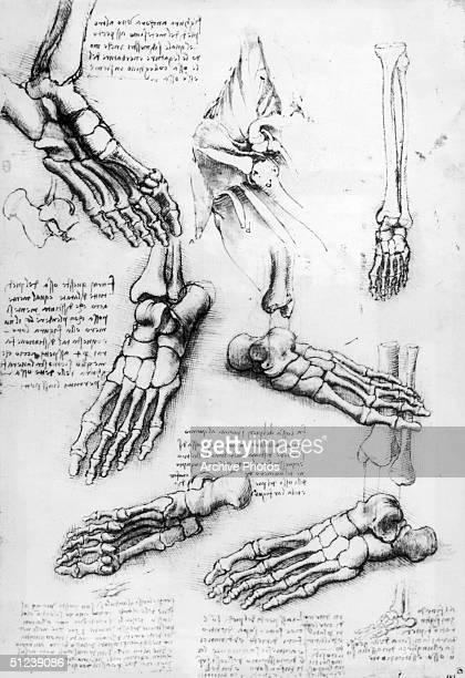 Circa 1509 Leonardo da Vinci A detail from one of da Vinci's sketchbooks Bones of the Foot and Shoulder pen and brown ink with wash over black chalk