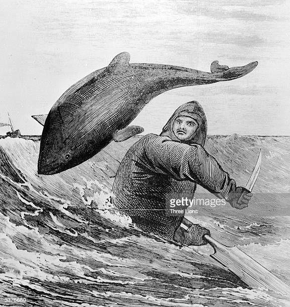 Captain Paul Boyton encounters a porpoise during his English Channel crossing without a vessel wearing his lifesaving airfilled swimming outfit