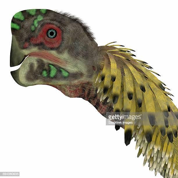 Citipati dinosaur head.