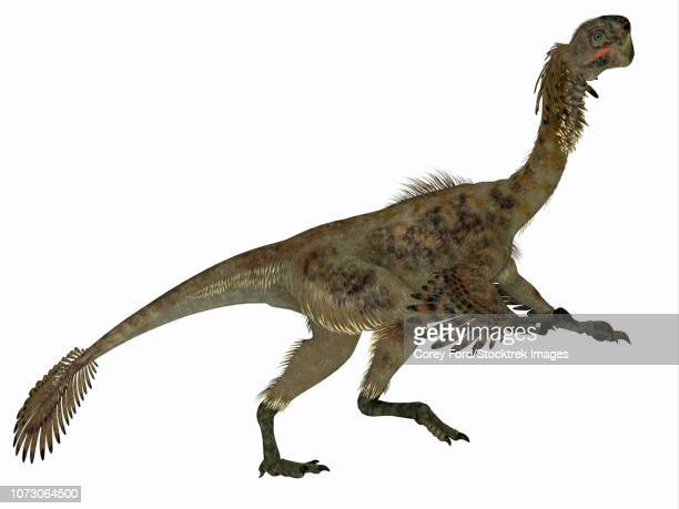 citipati female dinosaur, side profile. - dromaeosauridae stock illustrations