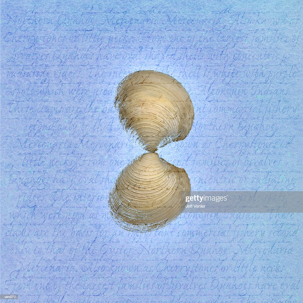 Clam Shell on Descriptive Background : Stockillustraties