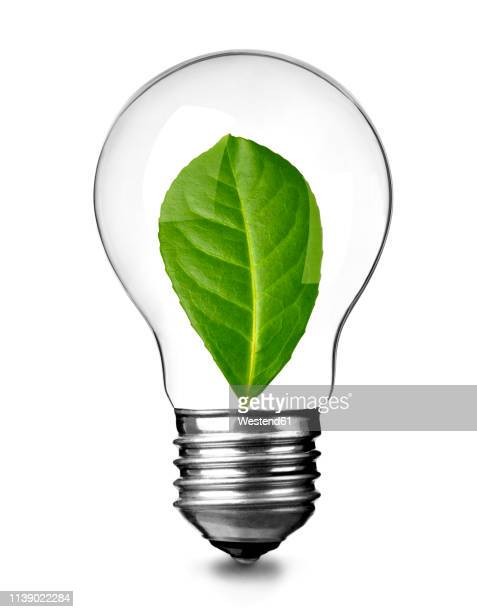 close up of a light bulb with green leave on white background, sustainability concept - スタジオ撮影点のイラスト素材/クリップアート素材/マンガ素材/アイコン素材