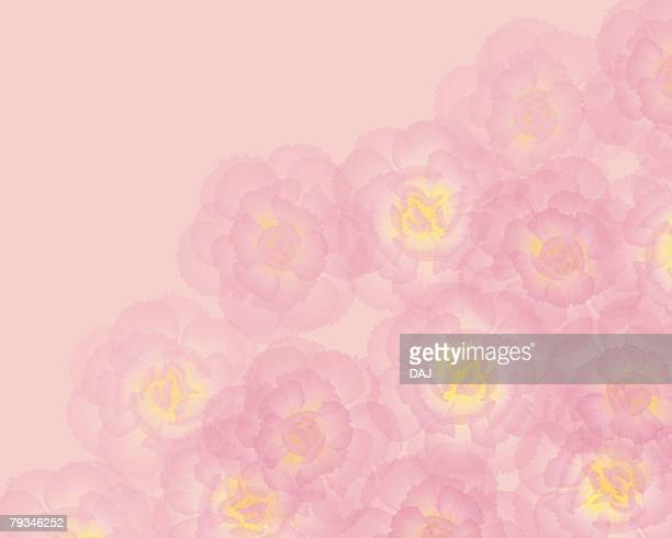 closed up image of several light pink-colored carnations, illustration, illustrative technique - carnation flower stock illustrations, clip art, cartoons, & icons