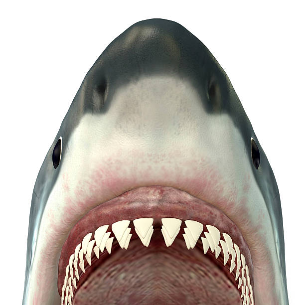 Close-up Of A Great White Shark. Wall Art