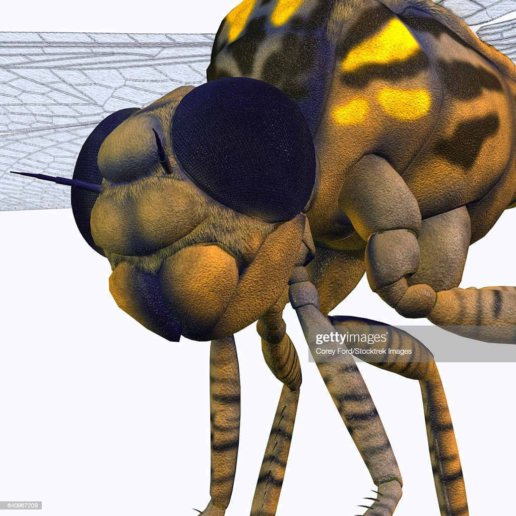 Close-up of a Meganeura insect from the Carboniferous Period. : stock illustration