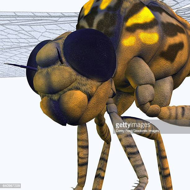 close-up of a meganeura insect from the carboniferous period. - odonata stock illustrations, clip art, cartoons, & icons