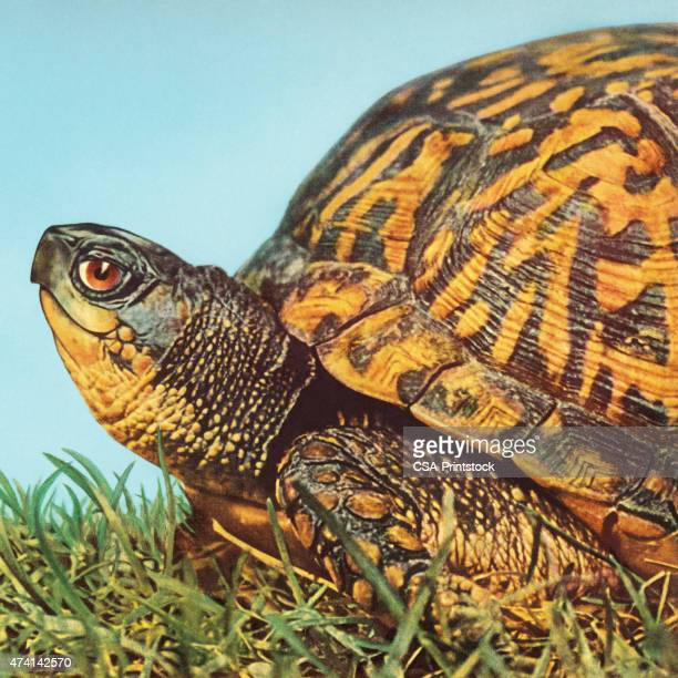 closeup of a turtle - turtle stock illustrations