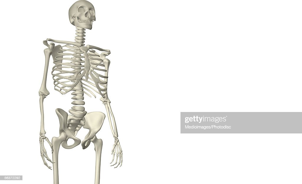 Closeup Of The Bone Structure Of A Human Body Stock Illustration