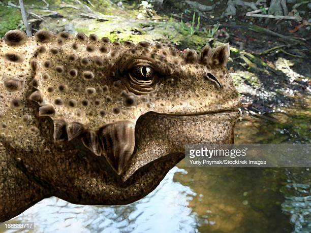 Close-up of the head of a Scutosaurus tuberculatus.
