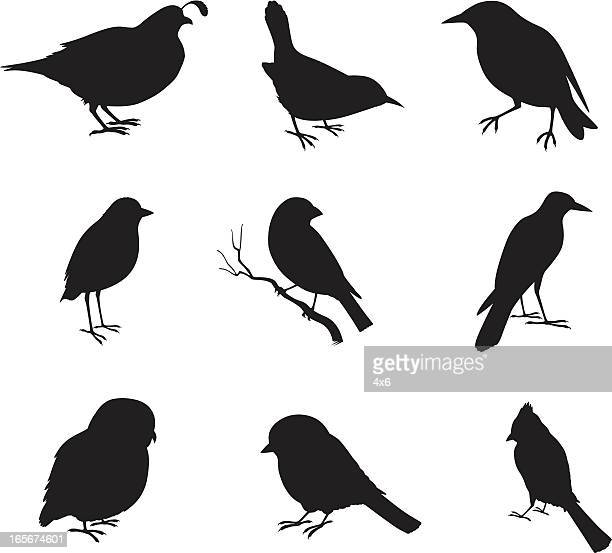 close-up of various birds - crow bird stock illustrations