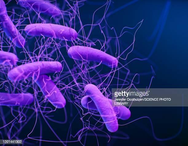 clostridioides difficile bacteria, illustration - 菌点のイラスト素材/クリップアート素材/マンガ素材/アイコン素材