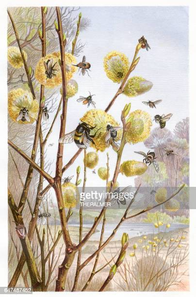 cluster of bees chromolithograph 1884 - chromolithograph stock illustrations