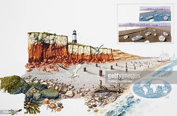 coastline showing cliffs, beach, lighthouse, wildlife and waters edge - driftwood stock illustrations