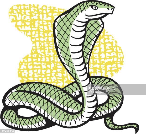ilustraciones, imágenes clip art, dibujos animados e iconos de stock de cobra - cobra