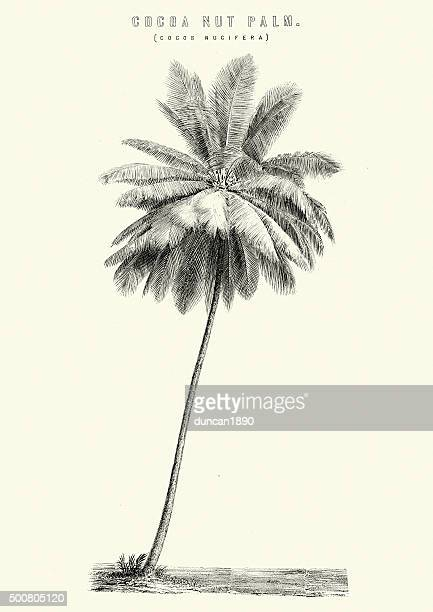cocoa nut palm - coconut leaf stock illustrations, clip art, cartoons, & icons