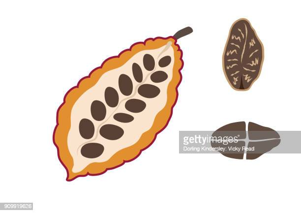 Cocoa pod and seed