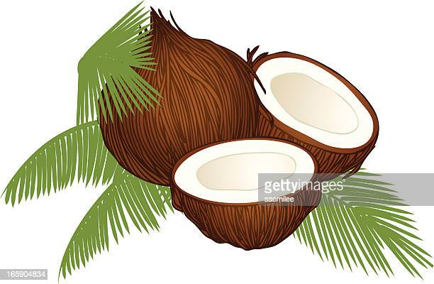 coconut - coconut leaf stock illustrations, clip art, cartoons, & icons