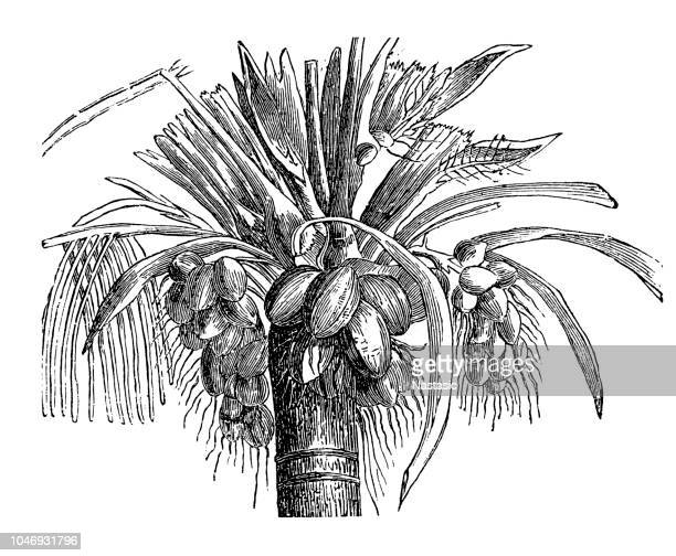 coconut palm tree - coconut leaf stock illustrations, clip art, cartoons, & icons