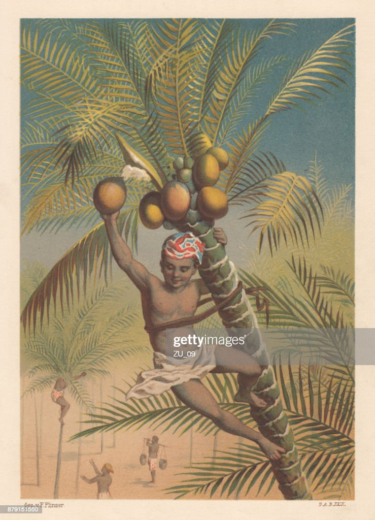 Coconut picker, litthograph, published in 1883 : stock illustration