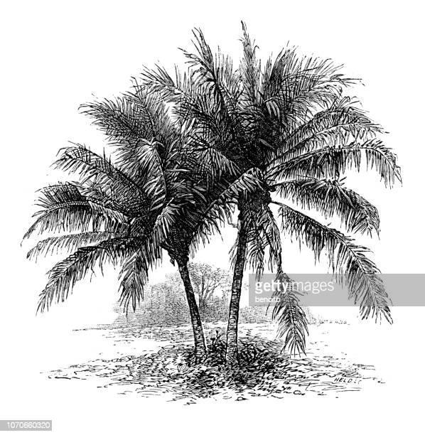 illustrations, cliparts, dessins animés et icônes de cocotier sur la plage - île
