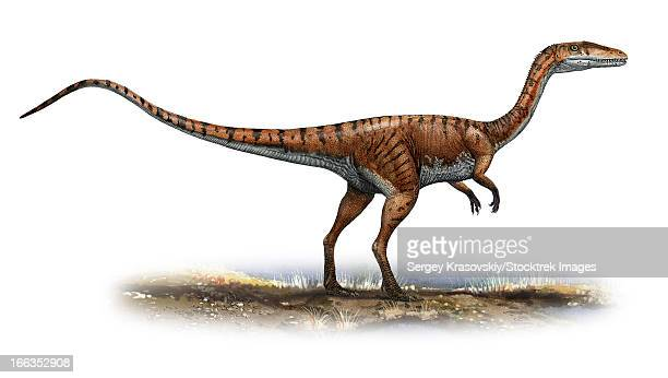 Coelophysis bauri, a prehistoric era dinosaur from the Late Triassic period.