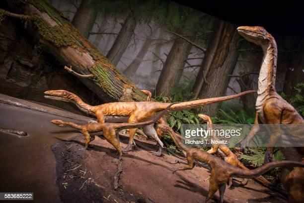 ilustraciones, imágenes clip art, dibujos animados e iconos de stock de coelophysis bauri dinosaur - triásico