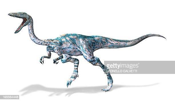 Coelophysis dinosaur, artwork