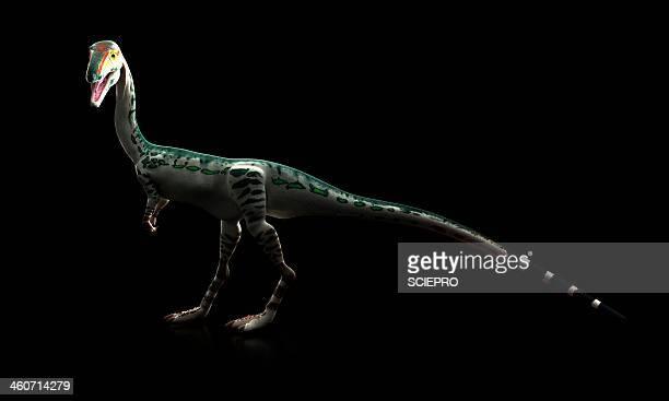 ilustraciones, imágenes clip art, dibujos animados e iconos de stock de coelophysis dinosaur, artwork - triásico
