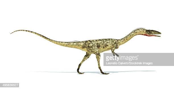 ilustraciones, imágenes clip art, dibujos animados e iconos de stock de coelophysis dinosaur on white background with drop shadow. - paleozoología