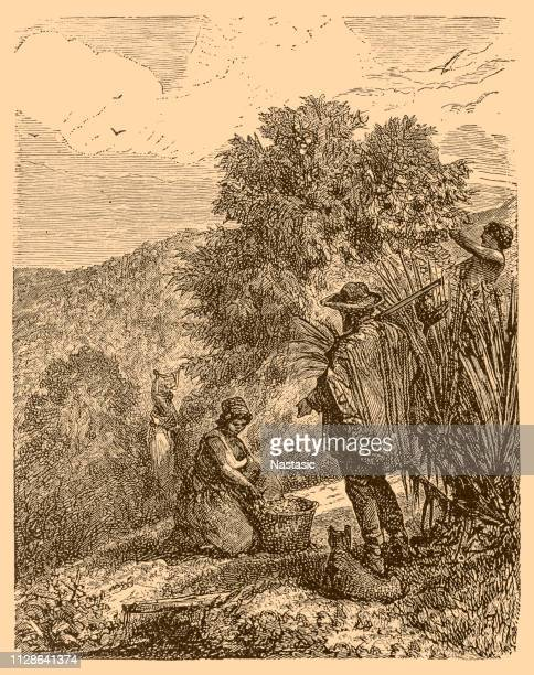 coffee plantation in brazil, mid 19th century - colombia stock illustrations