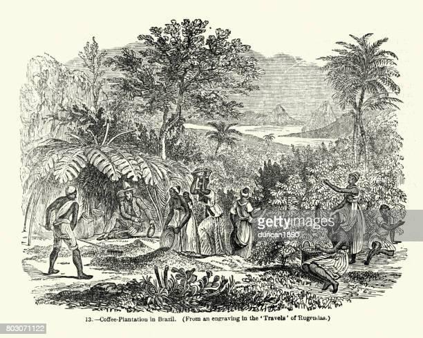Coffee Plantation in Brazil, mid 19th Century