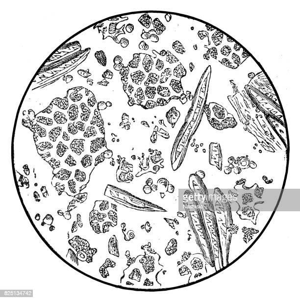 Coffee under microscope
