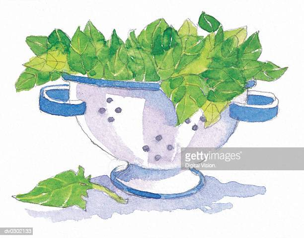 Colander filled with Spinach Leaves