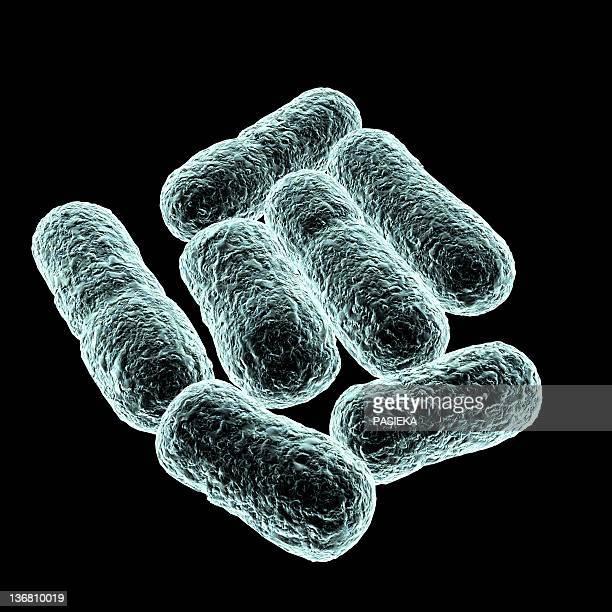 e coli bacteria, artwork - e. coli stock illustrations