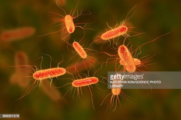 e coli bacteria, illustration - bacterium stock illustrations