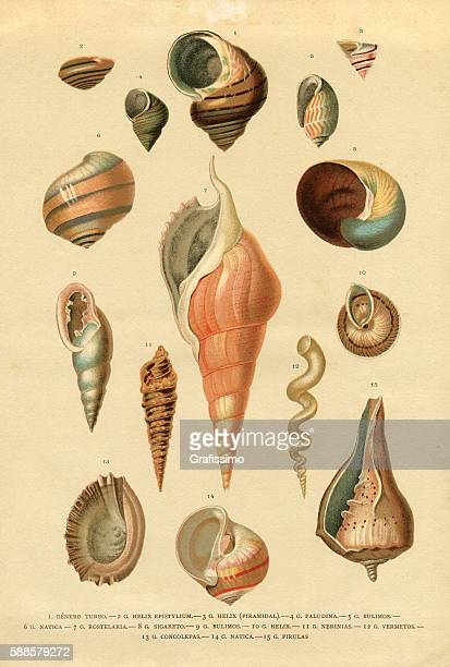 Collection of different snail shells mollusk