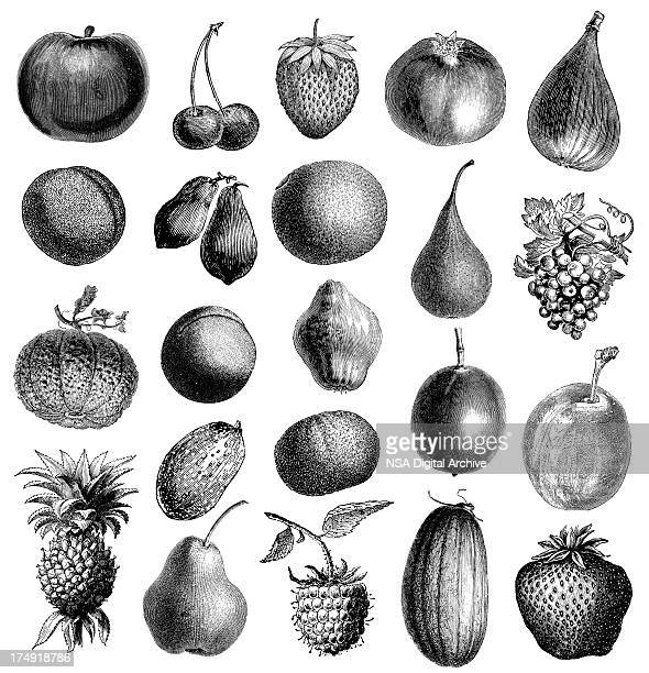 Collection of Fruit Illustrations
