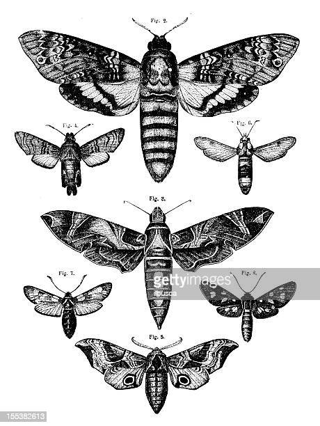 Collection of moths