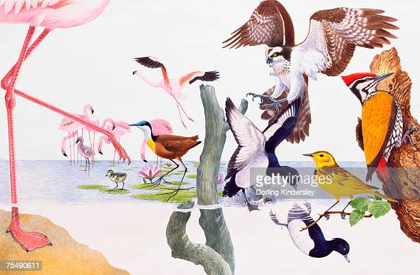colorful group of birds - webbed foot stock illustrations, clip art, cartoons, & icons