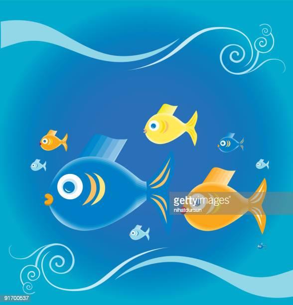 Colourful fish swimming underwater