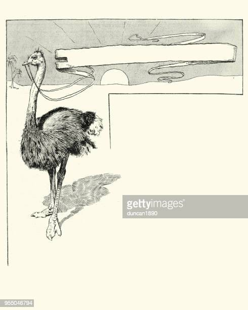 comic sketch of ostrich holding a banner - ostrich stock illustrations, clip art, cartoons, & icons